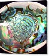 Abalone Seashell Canvas Print