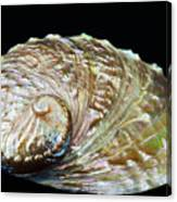 Abalone Shell Canvas Print