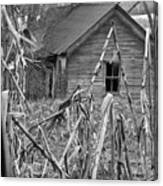 Abandoned Farmhouse Through Cornfield Canvas Print