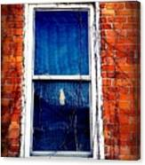 Abandoned House Window With Vines Canvas Print