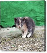 Abandoned Kitten On The Street Canvas Print