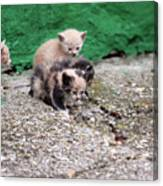 Abandoned Kittens On The Street Canvas Print