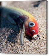 Abandoned Lure Canvas Print