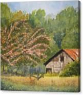Abandoned Mimosas Canvas Print