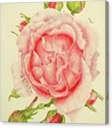 Abbi Rose Canvas Print