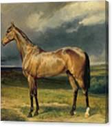 Abdul Medschid The Chestnut Arab Horse Canvas Print