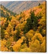Ablaze With Autumn Glory Canvas Print