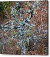 Abstract And Lichen Canvas Print