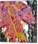 Abstract Autumn Leaf 2 Canvas Print