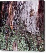 Abstract Bark 11 Canvas Print