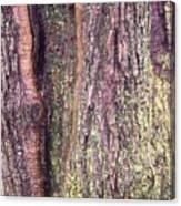 Abstract Bark 3 Canvas Print