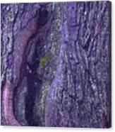 Abstract Bark 5 Canvas Print