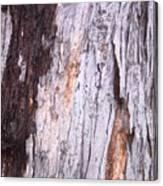 Abstract Bark 8 Canvas Print