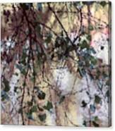 Abstract Birch Canvas Print