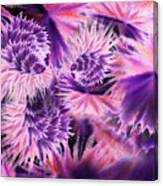Abstract Burst Of Flowers Canvas Print