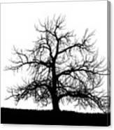 Abstract Bw Single Tree Canvas Print