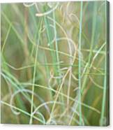 Abstract Curly Grass One Canvas Print