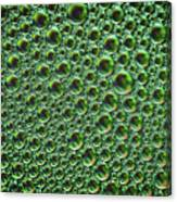 Abstract Green Alien Bubble Skin Canvas Print