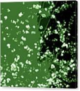 Abstract Of Backyard Blossoms Canvas Print
