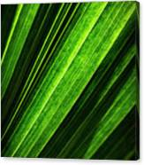 Abstract Of Green Leaf Of Exotic Palm Tree Canvas Print