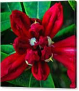 Abstract Rhoddy Bloom Canvas Print