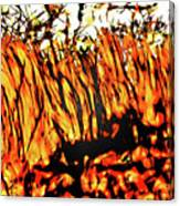 Abstract Saw Grass Iv Canvas Print