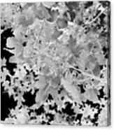Abstract Tree Landscape Dark Botanical Art Black Noir Canvas Print