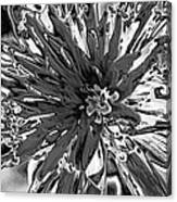 Abstract Wildflower 10 Canvas Print