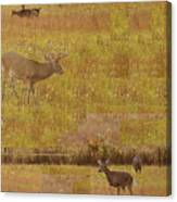 Abstract With White Tailed Deer Canvas Print