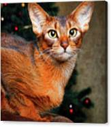 Abyssinian Cat In Christmas Tree Background Canvas Print