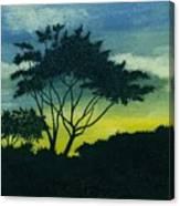 Acacia Tree Canvas Print