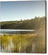 Acadia National Park Shoreline In Evening Sun Canvas Print