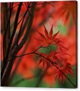 Acer Fanfare Canvas Print