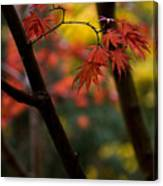 Acer Finish Canvas Print