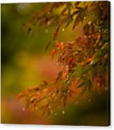 Acer Jewels Canvas Print