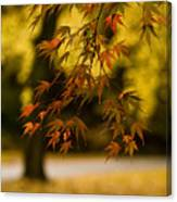 Acers Turning Canvas Print