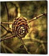 Single Tree Cone At Dusk Canvas Print