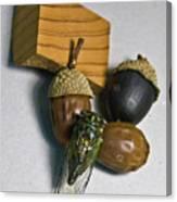 Acrons And Cicada Canvas Print