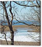 Across The Marsh To Woodneck Beach - Cape Cod Canvas Print