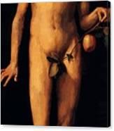 Adam 1507 Canvas Print