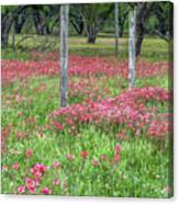 Adding A Splash Of Color-indian Paintbrush In Texas Canvas Print