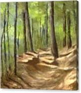 Adirondack Hiking Trails Canvas Print