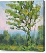 Adirondack Tree Canvas Print