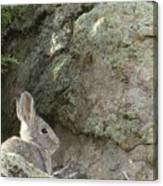 Adobetown Bunny Canvas Print