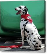 Happy Dalmatian  Canvas Print