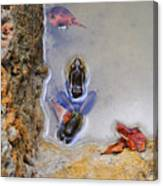 Adopted Amphibian Canvas Print