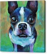 Adorable Boston Terrier Dog Canvas Print
