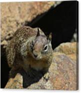 Adorable Up Close Look Into The Face Of A Squirrel Canvas Print