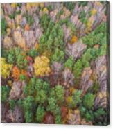 Aerial View Of The Forrest With Different Color Trees.  Canvas Print