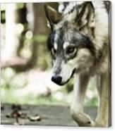 Aero Wolf 1 Canvas Print